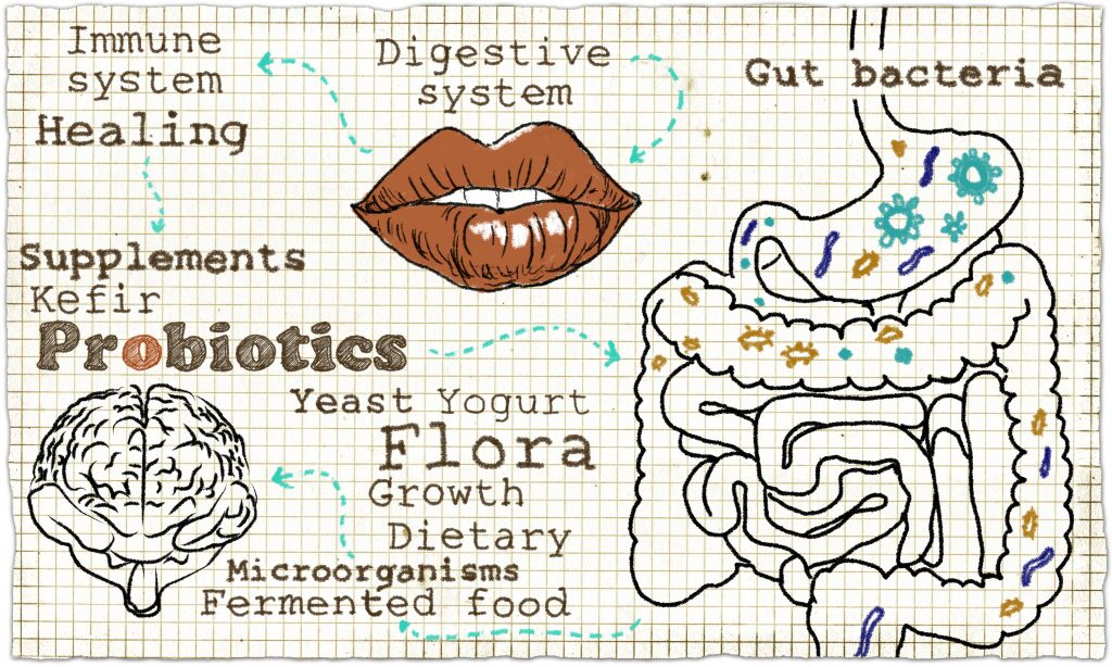 Probiotics - The Ultimate Guide to Gut Health